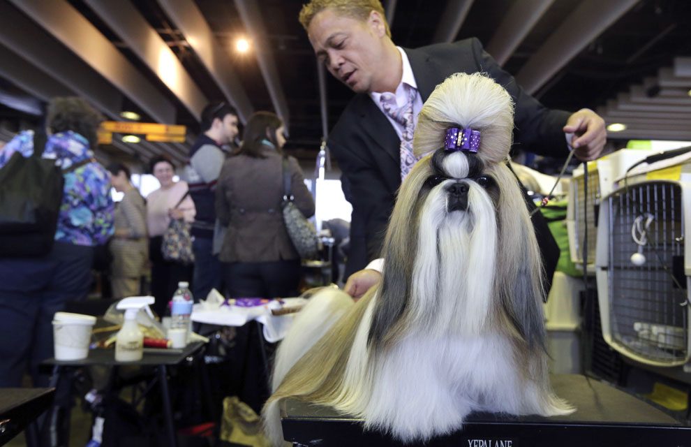 Ganador del concurso del Westminster Kennel Club Dog Show de Nueva York 2014 /Facebook